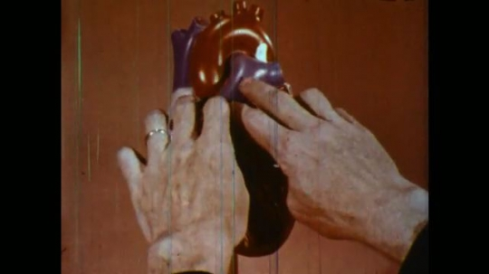 UNITED STATES 1950s: Plastic model of heart, hands open sides, zoom in on valve.