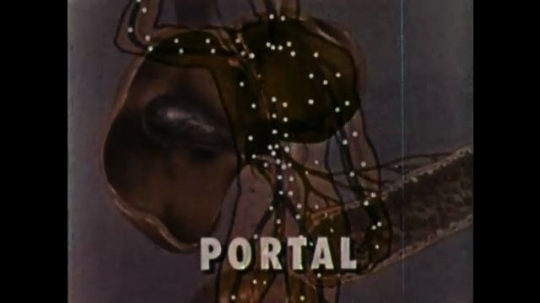 UNITED STATES 1960s: Animation of organs. Portal. Animation of circles flowing through organs.