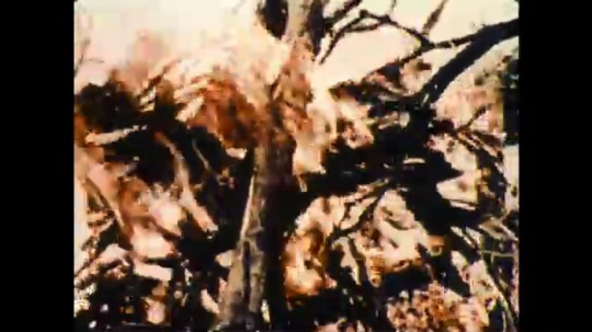 United States: 1970s: Close up of flames on wood fire. Man pulls fresh wood from trees. Man sits by fire. Ice melts. Close up of flames.