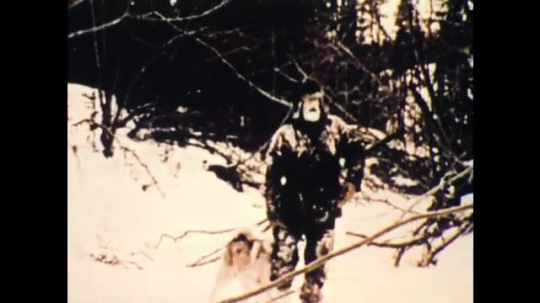 United States: 1970s: man walks through snow with dogs.