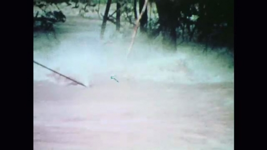 United States: 1970s: man caught in flooded river clings to tree