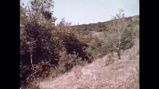 United States: 1976: man and boy hike up mountain slope. Fire in forest.