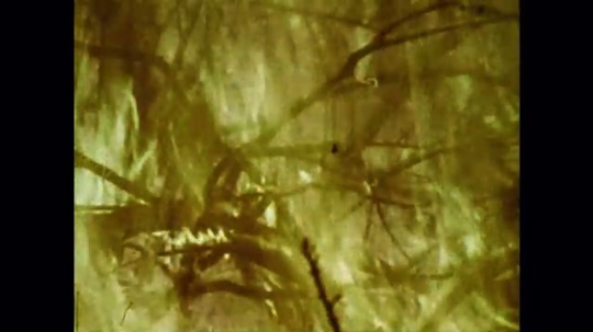 United States: 1976: flames in forest. Close up of flames in woods. Trees on fire.