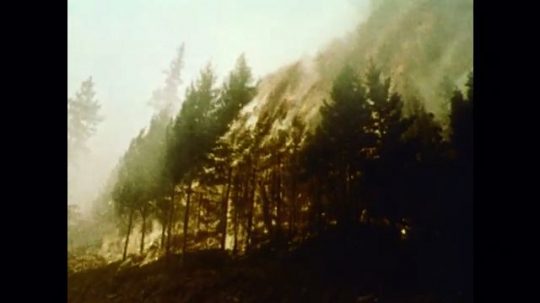 United States: 1976: trees of fire in mountain forest.