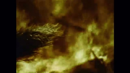 United States: 1976: close up of evergreen trees in flames. Fire in forest