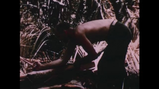 PACIFIC OCEAN: 1940s: man takes sample of coconut palm. Man strips plant flower. Coconut water
