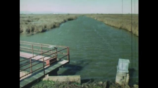 UNITED STATES: 1980s: water impoundment on wetland habitat. Duck dives below water. View of wetland from above. Duck and ducklings