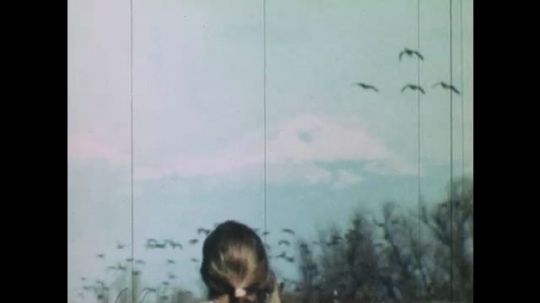 UNITED STATES: 1980s: lady takes photos of birds. Diggers drive through wetland environment. Heron flies from tree.