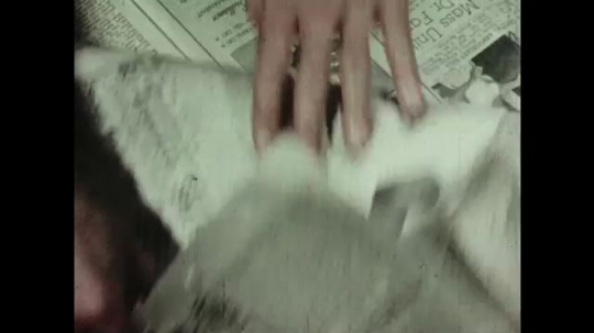UNITED STATES: 1950s: hand folds newspaper. Girl reads book on floor with cat. Hands operate printing press.