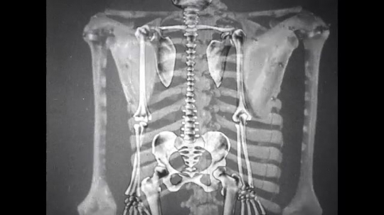 UNITED STATES: 1950s: animation of spinal column and skeleton. Ribs and floating ribs