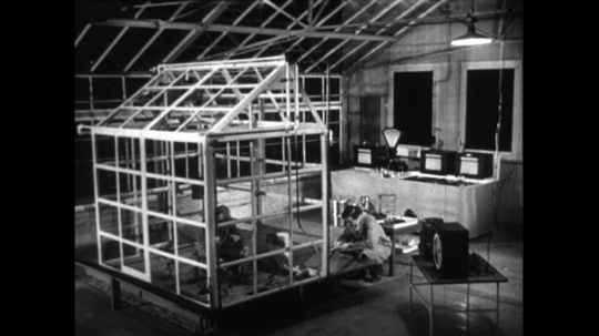 UNITED STATES 1950s: Scientists build a green house inside a building.