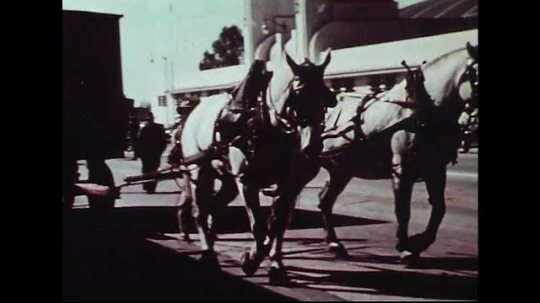 UNITED STATES 1950s : Two horses pull a red Cole Brothers Circus wagon through a city street.