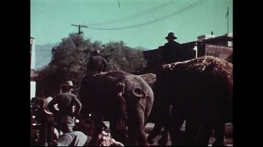UNITED STATES 1950s : Trainers riding on elephants to guide them through the streets.