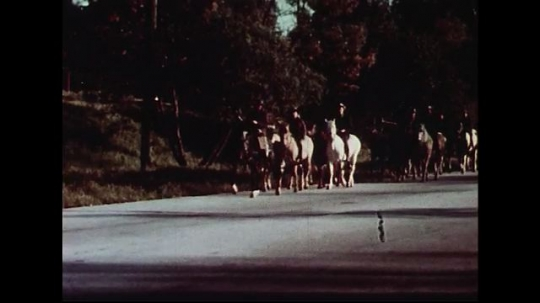 UNITED STATES 1950s : Several men ride circus horses along a highway as they walk gingerly.