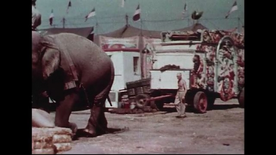 UNITED STATES 1950s : Before a circus show, elephants rest and play on the field.