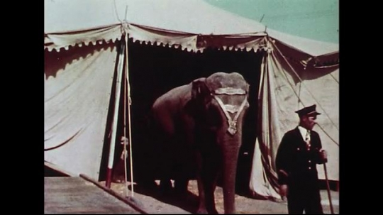 UNITED STATES 1950s : Circus elephants walk out of their tents one by one into the circus.