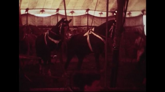 UNITED STATES 1950s : Horses walking around the circus one by one.