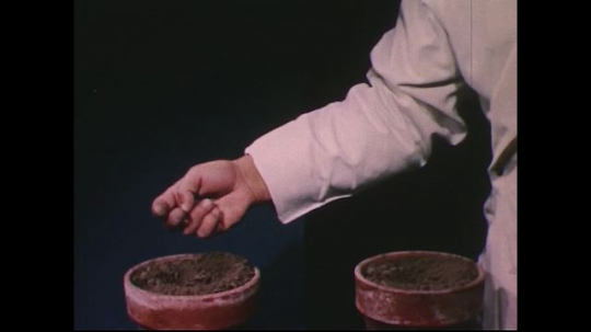 UNITED STATES 1950s: Hand plants seeds in pot / Split screen of plants in light and dark.