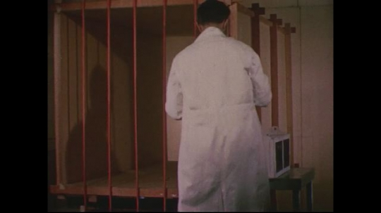 UNITED STATES 1950s: Scientist puts bars on cage, walks out of room / Scientist releases bat / Bat flies through bars / Bat flies through bars again.