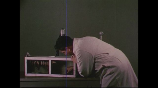 UNITED STATES 1950s: Scientist removes bat from cage, holds it up to microphone / Hand adjusts amplifier knobs /