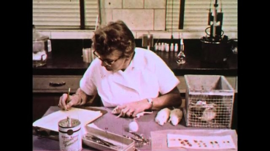 UNITED STATES 1960s: A researcher records findings of test on laboratory animals.