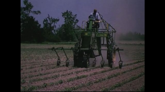 UNITED STATES CIRCA 1960s-80s : A farmer drives his tractor carefully to avoid running over crops while fertilizing them.