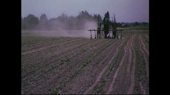 UNITED STATES CIRCA 1960s-80s : A tractor sprays growing crop with fertilizer as it passes by.
