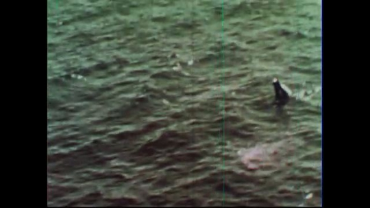 UNITED STATES 1950s:  A space capsule floats in the ocean. A helicopter descends to lift it out.