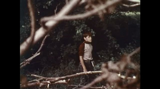 UNITED STATES 1970s: Boy standing in forest / Bear walking in forest