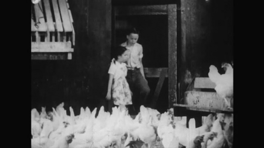 UNITED STATES 1950s: A boy takes the girl into a room full of adult chickens feeding on food.