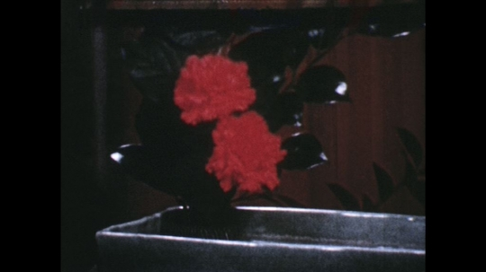 UNITED STATES: 1960s: lady puts red flower in arrangement.