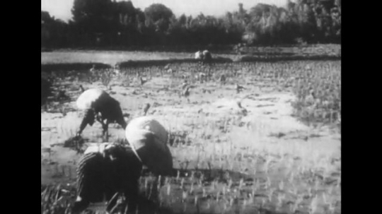 UNITED STATES 1940s: Workers in field / Man plows field / Workers in field, mountains / Men carry supplies / Workers harvest / Worker plants seeds / Department store interior.