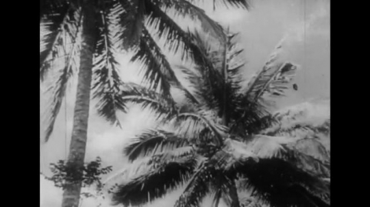UNITED STATES 1940s: Tracking shot of palm trees / Dissolve to palms, beach / Cliffs along coastline / Views of women in rice fields, mountain in background.