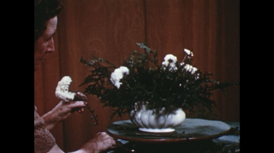 UNITED STATES: 1960s: lady adds white flowers to arrangement.