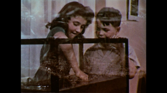 UNITED STATES: 1950s: children put plants in fish tank.