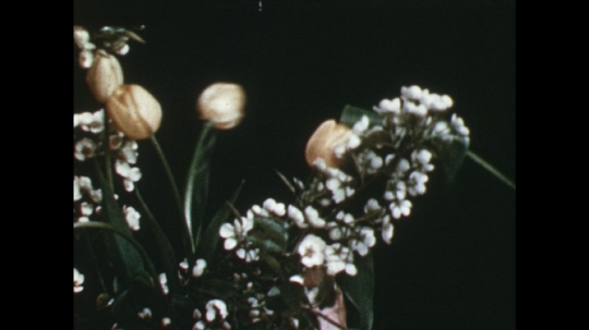 UNITED STATES: 1960s: lady adds tulips to arrangement. Lady cuts flowers with secateurs