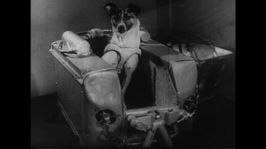 UNITED STATES 1930s: A dog prepares to go to space with different tests.