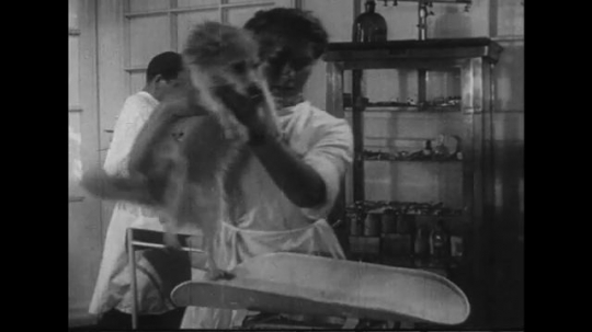 UNITED STATES 1950s: Woman in lab puts dog on scale / Dog put in space capsule / Close up of dog / Scientists move dog in capsule.