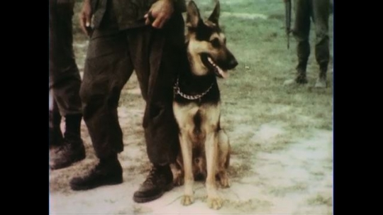 VIETNAM 1960s: Dog with soldier / Soldiers march with guns / Soldiers march / Soldier walks dog.
