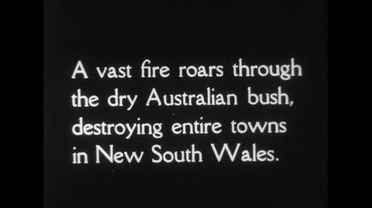 AUSTRALIA CIRCA 1951 : A vast fire roars through the dry Australian bush, destroying entire towns in New South Wales.
