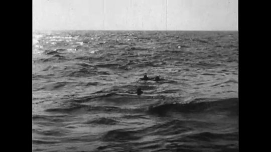 UNITED STATES CIRCA 1951 : Members of the crew of the Navy, jump off a submarine to rescue stranded passengers after a helicopter crashes into the sea.