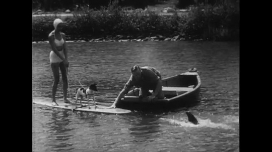UNITED STATES CIRCA 1951 : A woman standing on a paddleboard with her dog is pulled through the waters by a dolphin.