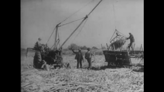 UNITED STATES: 1950s: workers gather up sugar cane from ground. Sugar cane being loaded on to canal boats. Train leaving a sugar mill. Crane loading sugar cane on to a truck.