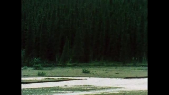 ALASKA, UNITED STATES: 1980s: river flows through Denali National Park. Horse eats grass by forest