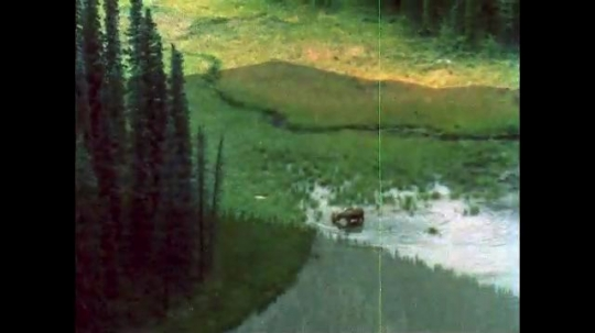 ALASKA, UNITED STATES: 1980s: Moose in water. Goats on scree slope.
