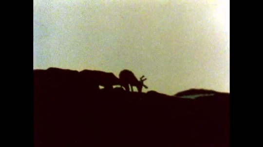 ALASKA, UNITED STATES: 1980s: Outline of caribou at sunset. Mountain valley. Caribou cross valley floor.