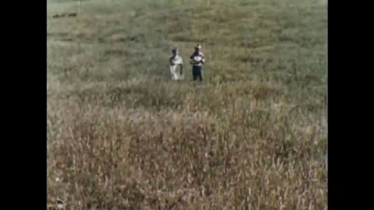 UNITED STATES, 1956: Boy and girl walk through field pulling up wheat stalks.