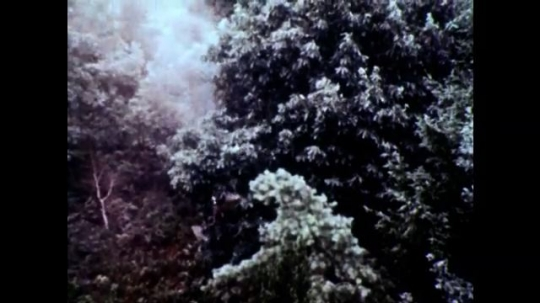 UNITED STATES, 1973: Chemical clouds form as insecticide is sprayed through trees.