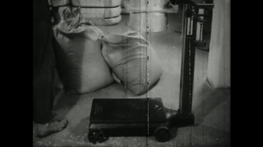 UNITED STATES, 1940s: man picks up empty sack. Cotton inside machinery on metal grid.
