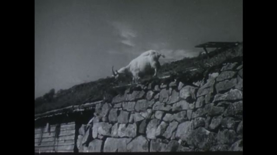 NORWAY 1950s: Goat grazing on wall / Girl milks cow / Mom and kids milking, pick up pails / High angle view, boy and girl next to canyon and waterfall.